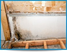 mold remediation Houston TX